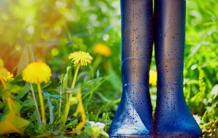 rubber boots covered with water drops on spring garden background Stock Photo