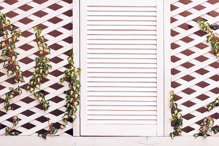 wooden trellis facade wall with young weaving ivy plant