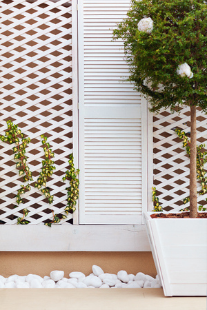 wooden trellis facade wall with young weaving ivy plant and potted topiary ligustrum