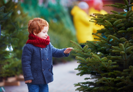cute happy baby boy choosing the christmas tree for winter holidays at seasonal market Banque d'images