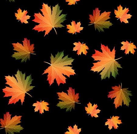 Autumn seamless pattern design on black. Fall time maple leaves. Bright editable Vector Illustration.  イラスト・ベクター素材