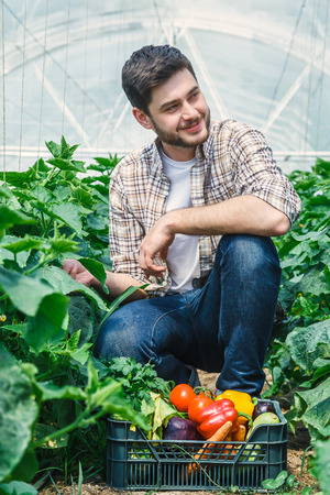 agricultural engineering: Young guy is sitting between rows of plants while, working in a greenhouse.