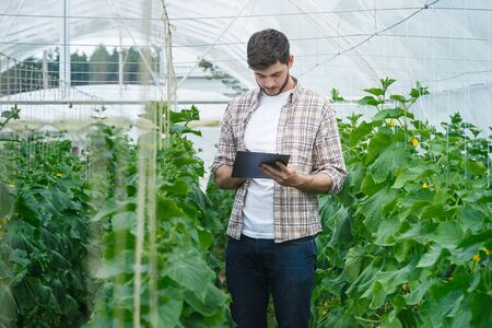 collate: Guy with the tablet slowly inspect plants. Young agronomists monitor the harvest. Young farmers are grown and harvested organic vegetables. Stock Photo