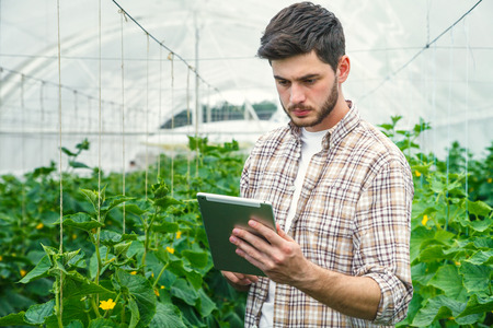 in the greenhouse: Young man working in a greenhouse recording measurements