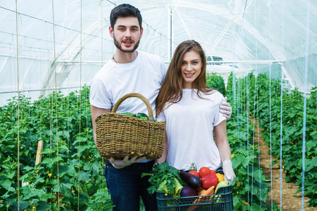 crop harvest: Young farmers are grown and harvested organic vegetables.