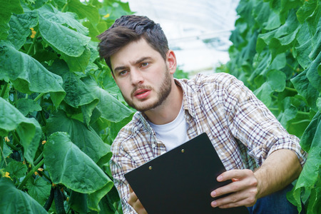 collate: Young farmers are grown and harvested organic vegetables