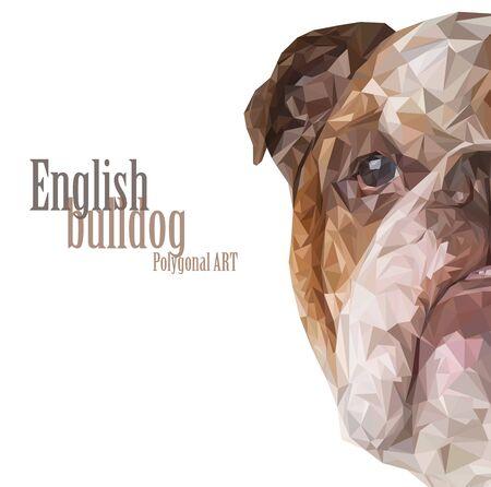 Bulldog inglés. dibujo poligonal. El mapa de bits de dibujo sobre un fondo blanco.