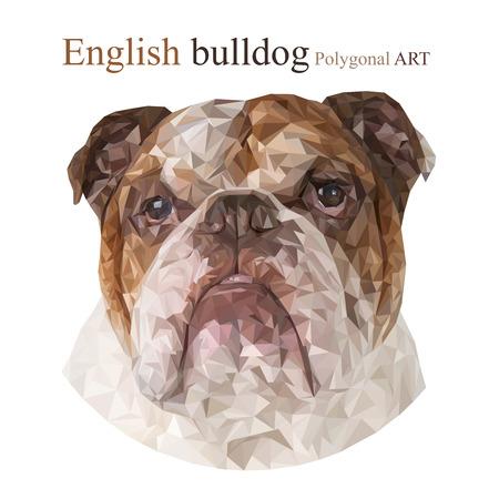 bitmap: English bulldog. Polygonal drawing. The bitmap drawing on a white background. Stock Photo