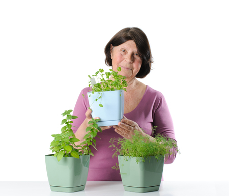 Elderly woman with herb seedlings in pots. Studio photography on a white background. Stock Photo