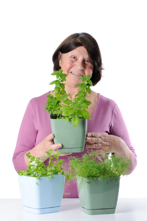 Charming pensioner with seedlings of basil, dill and cilantro. Studio photography on a white background. Stock Photo