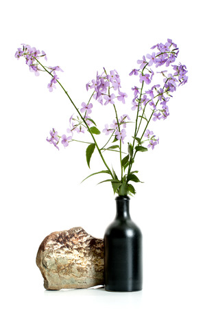 Branches of flowering Hesperes (Night violet) lilac in a black ceramic vase on a white background. Stock Photo