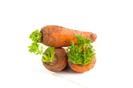 unclean: Three freshly-digested young carrots with a tops on a white wooden table.