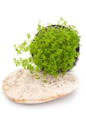 berro: Ensalada fresca del berro (Lepidium sativum) en un fondo blanco.