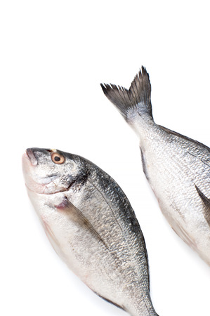 Two pieces of fresh Dorado fish on a white background. Isolated.