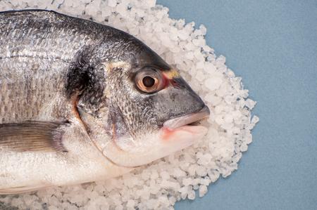 Dorado fish on a large sea salt close-up on a light blue background.