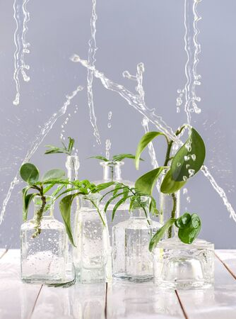 Green leaves in glass vases and bottles under the spray of water.
