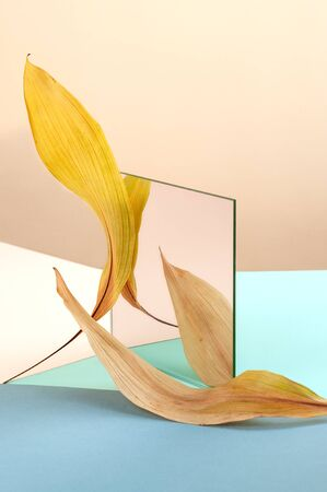 Abstract still life using a mirror and dry leaves.
