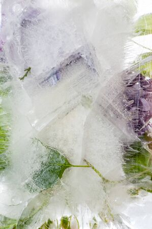 Multicolored plants in frozen water. Background image.