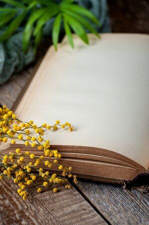 Opened book with blank pages on an old wooden table with mimosa flowers. Stockfoto