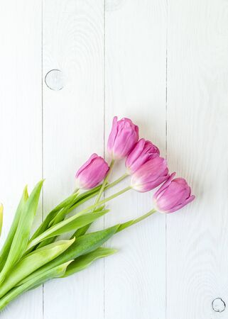Pink tulips on a white wooden table. .