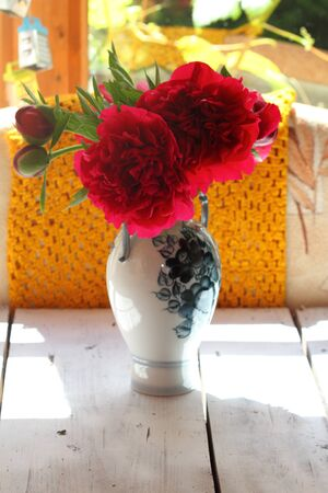 claret: claret peonies in a vase in beams of the summer sun