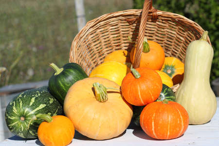 grades: crop of pumpkins of different grades on a white background from old boards and a basket