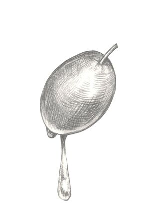 Sketch hand drawn olive with drop with oil. Olive fruits vintage illustration isolated on white background.