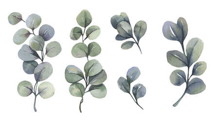 Watercolor floral illustration set - green eucalyptus leaf branches collection, for wedding invitation, greetings cards, wallpapers, background. Eucalyptus, green leaves. High quality illustration
