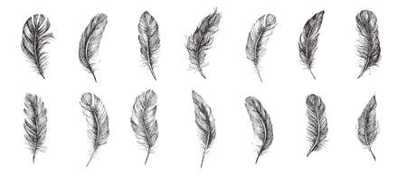 Feather Pattern, hand drawn style, vector illustration.
