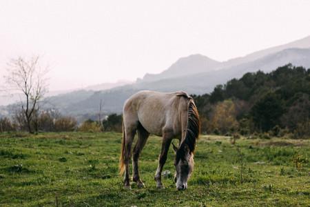 Gray horse grazes Reklamní fotografie - 122331558