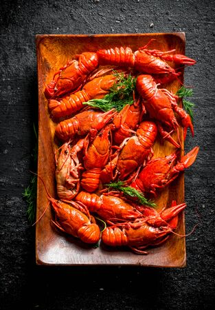 Boiled crayfish on a plate with dill. On black rustic background