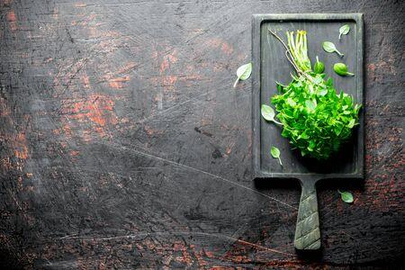 Bunch of fresh Basil on the cutting Board. On dark rustic background 写真素材