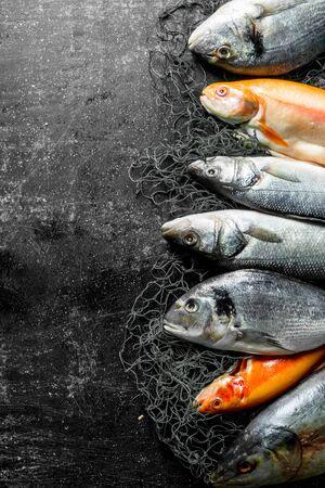 Variety of fresh fish. On dark rustic background