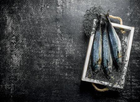 Fresh raw mackerel on a tray in a fishing net. On dark rustic background Reklamní fotografie