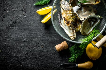 Raw Opened oysters in a colander with dill and lemon. On black rustic background Banco de Imagens
