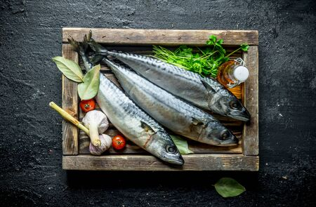 Raw fish mackerel with herbs and garlic on tray. On black rustic background Фото со стока