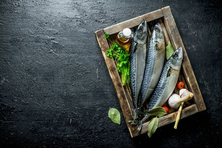 Fresh raw mackerel on a wooden tray with parsley and garlic. On black rustic background