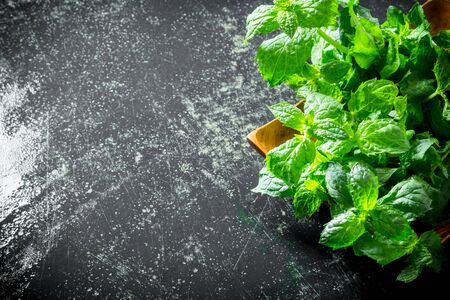 Fresh green mint on the plate. On dark rustic background Stok Fotoğraf
