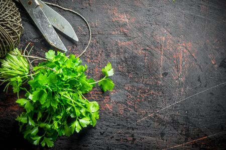 Freshly cut parsley from the home garden. On dark rustic background Stok Fotoğraf