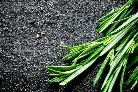 Fresh herbs. Rosemary. On black rustic background Imagens - 124763708
