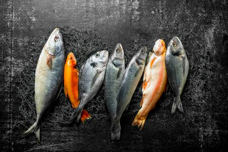 Assortment of fresh fish on the fishing net. On dark rustic background Stok Fotoğraf
