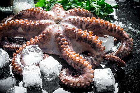 Fresh octopus with ice. On rustic background Banque d'images - 124763595