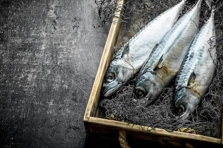 Fresh fish mackerel in box with fishing net. On dark rustic background Banque d'images - 124763600
