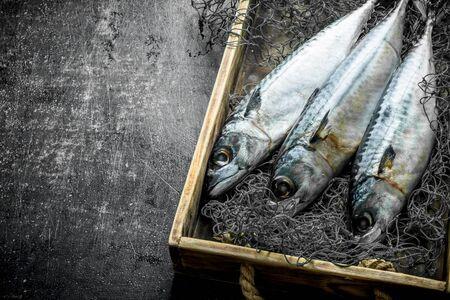 Fresh fish mackerel in box with fishing net. On dark rustic background Reklamní fotografie