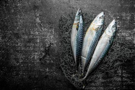Fresh raw mackerel with fishing net. On dark rustic background