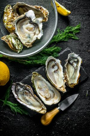 Fresh raw oysters on a stone Board and in a colander with lemon and dill. On black rustic background Stok Fotoğraf - 124763540
