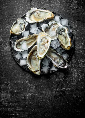 Fresh raw oysters with ice cubes on a plate. On dark rustic background Stok Fotoğraf - 124763365
