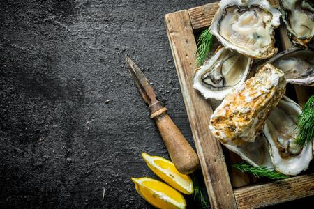 Fresh raw oysters on a wooden tray with lemon slices. On black rustic background Banco de Imagens