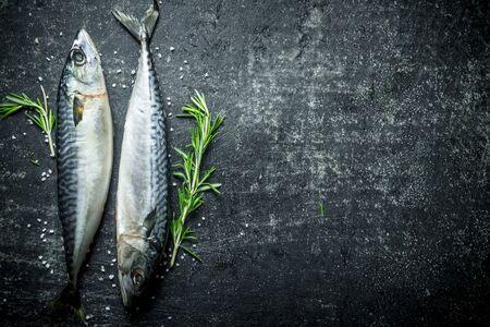 Fresh mackerel with sprigs of rosemary. On dark rustic background