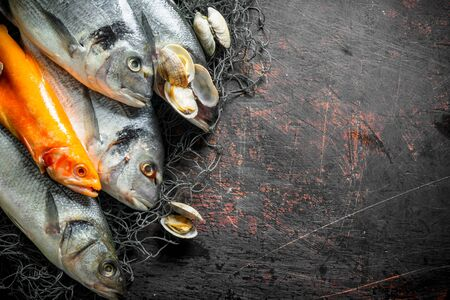 Various raw fish on fishing net with oysters. On dark rustic background Reklamní fotografie